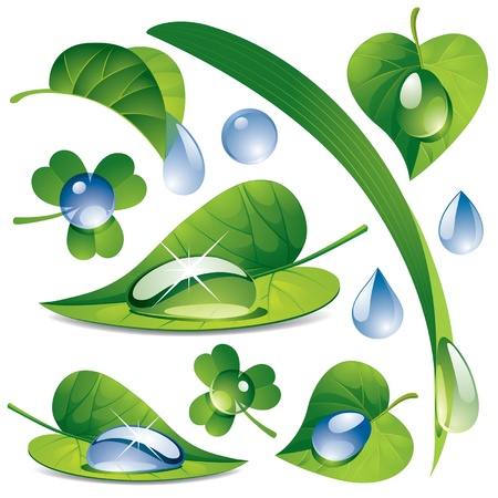 pellucid: Vector image of a water drops with a green leafs Illustration