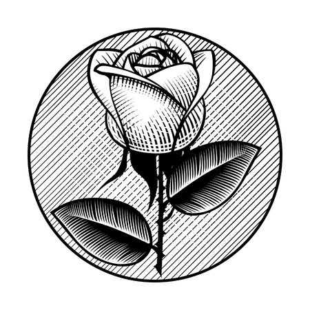 Round retro icon and label with white rose. Vintage engraving stylized drawing. Vector illustration Çizim