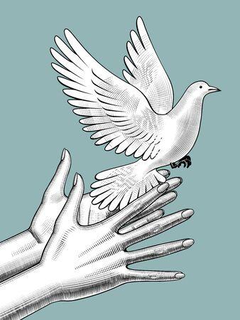Manos femeninas sueltan una paloma blanca. Dibujo estilizado vintage. Ilustración de vector
