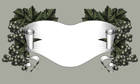 Ribbon banner with bunch of grapes with leaves. Vintage black and white engraving stylized drawing. Vector illustration