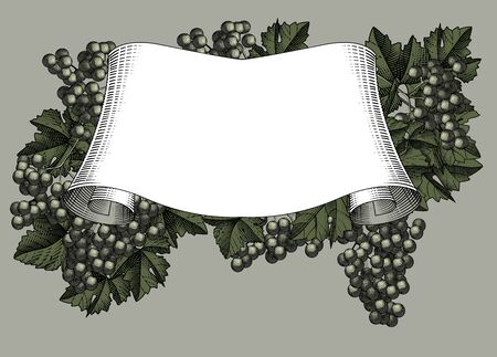 Ribbon banner with bunch of grapes with leaves. Vintage black and white engraving stylized drawing. Vector illustration.