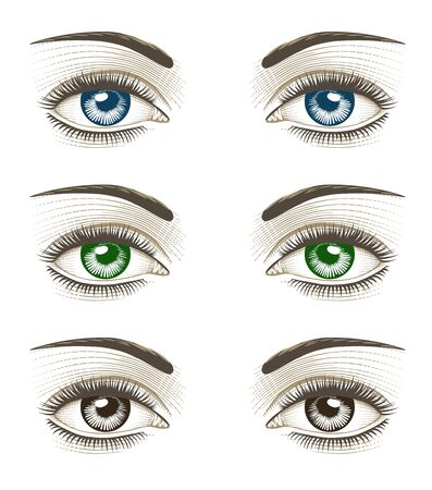 Womens luxurious eyes with perfect eyebrowes and full lashes. Vintage engraving stylized drawing. Vector illustration 向量圖像