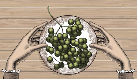Bunch of grapes on a plate. Vintage engraving color stylized drawing. Vector illustration 向量圖像