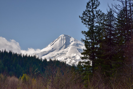 mount hood: Mount Hood, Oregon. Oregons highest mountain at appx 11,232 ft. Covered in snow and viewed from the northeast. Stock Photo