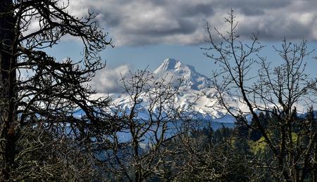 Mount Hood, Oregon, jest najwyższą górą stanową na wysokości około 11,232 ft. Ten szczególny obraz pokazuje górski podgląd przez gałęzie drzew, przypominający zdjęcie z góry Fuji. Góra i otaczające ją lasy zapewniają całoroczną rekreację Zdjęcie Seryjne