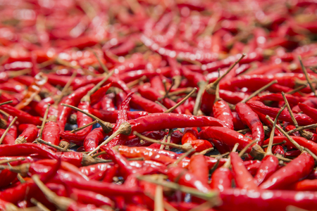 red chilly: Red Hot,chilly,Vegetable,thailand
