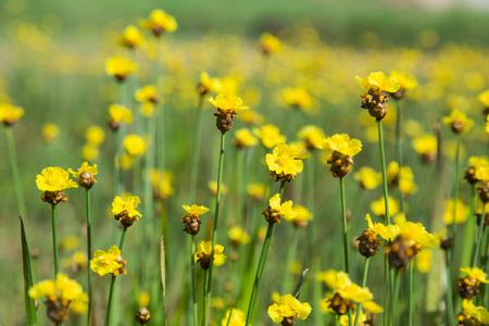 Thailand,plant,flower,wallpaper,green