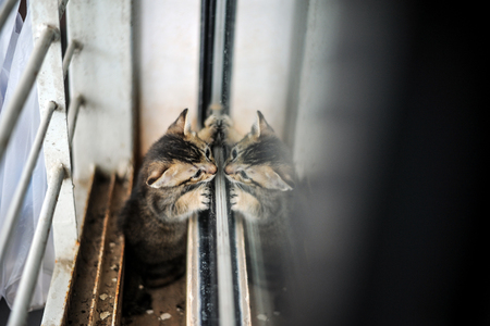 Orphaned kitten looking into mirror Stock Photo