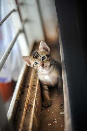 Orphaned kitten looking at camera