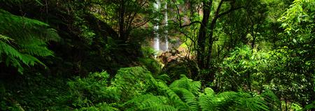 호주 풍경 : 퀸 메리 폭포 퀸즐랜드의 주요 범위 국립 공원 스톡 콘텐츠