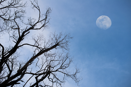 Haunting dead tree branches and a big moon