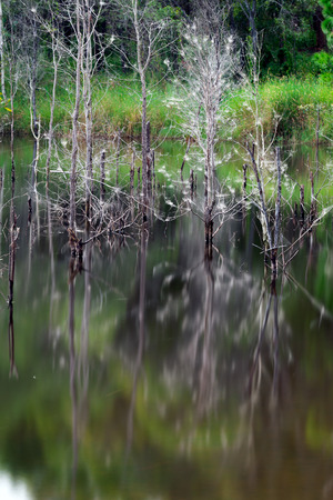 Artistic reflection of death trees on water