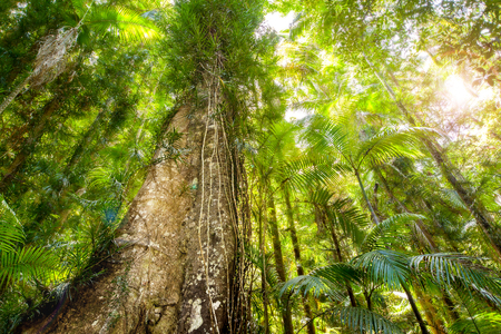 Dense forest canopy viewed from ground Stock Photo