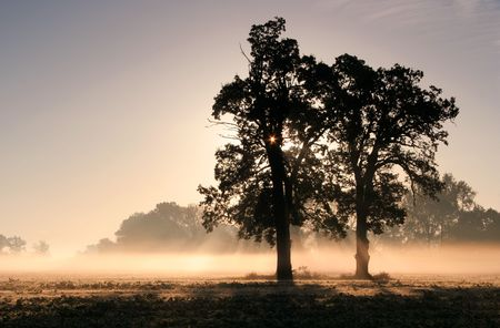 Sun rays crossing a misty trees photographed in an early autumn morning. Stock Photo - 753509