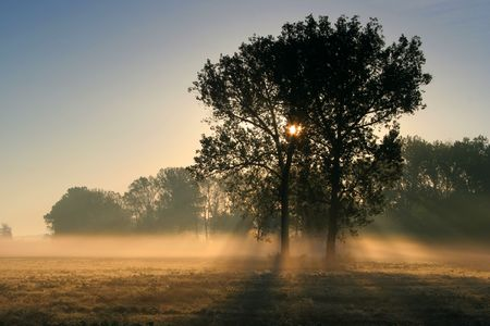 timberland: Sun rays crossing a misty trees photographed in an early autumn morning.