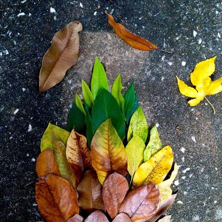 dark: Autumn leaves on dark background