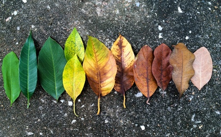 color tone: Color tone of leaves Stock Photo