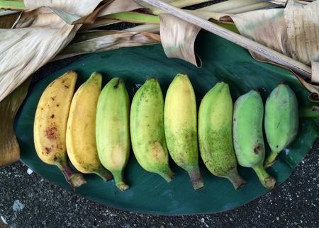 color tone: Tropical bananas color tone