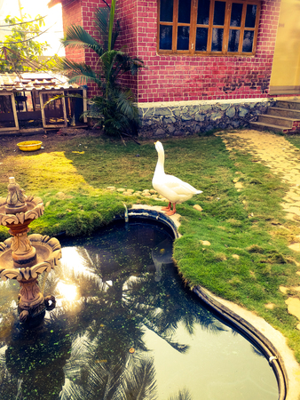 Village farm shot with duck near a pond with fountain Banco de Imagens