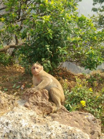 Monkey on the road front view