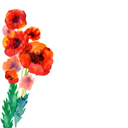 isolated on red: White background with watercolor poppies and copy space Illustration