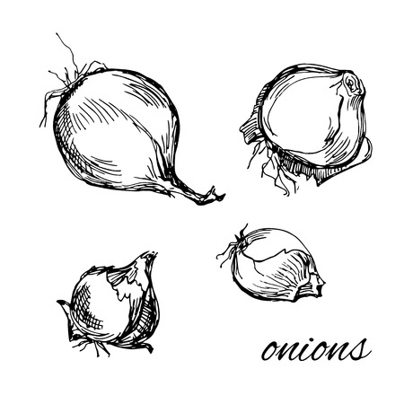 genetic modification: Black and white hand drawn onions