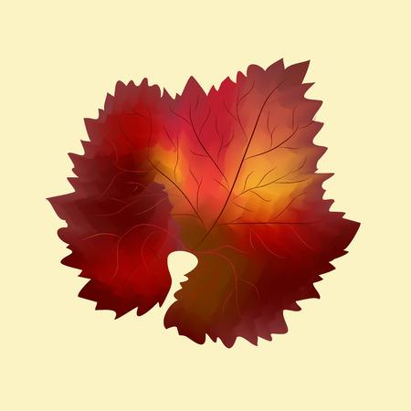 grape leaf: Isolated colorful fall grape leaf