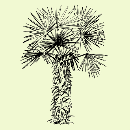 subtropical: Hand drawn black and white single palm tree Illustration