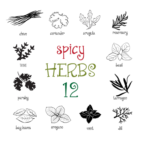 chive: Web icon set of different spicy herbs Illustration