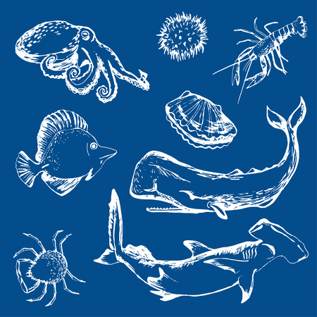 sperm whale: shellfish, lobster, sperm whale, shark, porcupine fish, crab, octopus; i Illustration