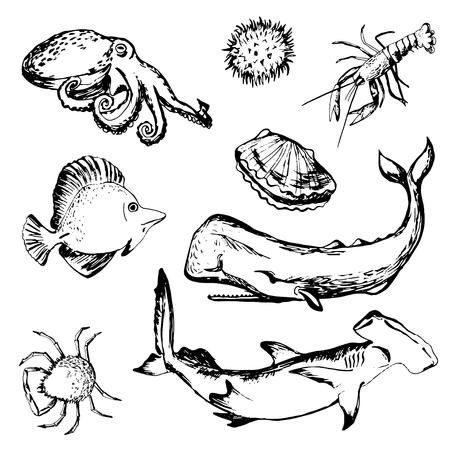 Hand drawn sea life: sshellfish, lobster, sperm whale, shark, porcupine fish, crab, octopus Illustration