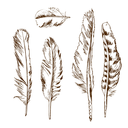 feather quill: Hand drawn different types of birds feather Illustration