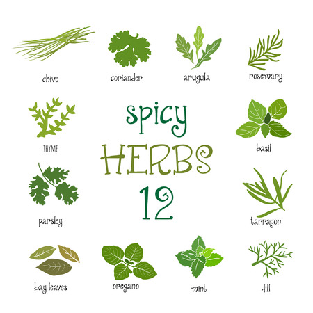 Web icon set of different spicy herbs 일러스트