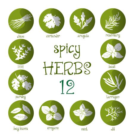 leaf illustration: Web icon set of different spicy herbs Illustration