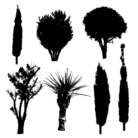 evergreen tree: Silhouettes of different kind of trees and bushes