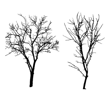 poplar: Two winter tree black silhouettes