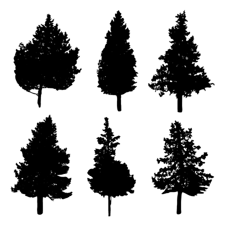 Siluetas de los diferentes tipos de árboles de abeto y pino
