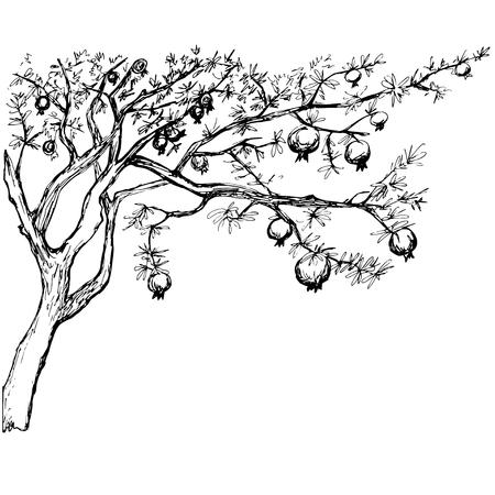 Hand drawn black and white pomegranate tree Illustration