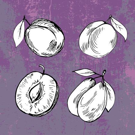 violet background: Prugna disegnata a mano su grunge sfondo viola