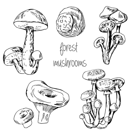 edible: Forest hand drawn edible mushrooms