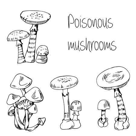 fairy toadstool: Hand drawn Type of poisonous mushrooms Illustration