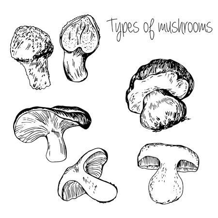 morel: Hand drawn Types of mushrooms Illustration
