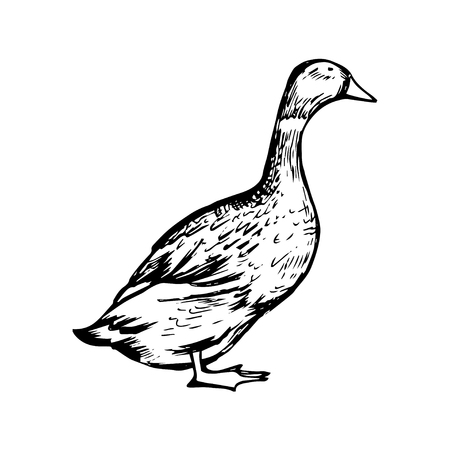 duck meat: Hand drawn black and white duck