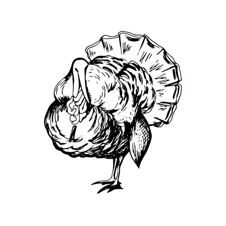 Hand drawn black and white turkey Illustration