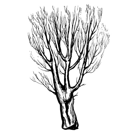hand drawn tree: Hand drawn tree silhouette and stump on white background