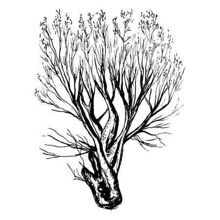 Dibujado a mano silueta de árbol y el muñón en el fondo blanco Ilustración de vector