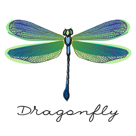 colorful  dragonfly with doodle drawn wings Stock Illustratie