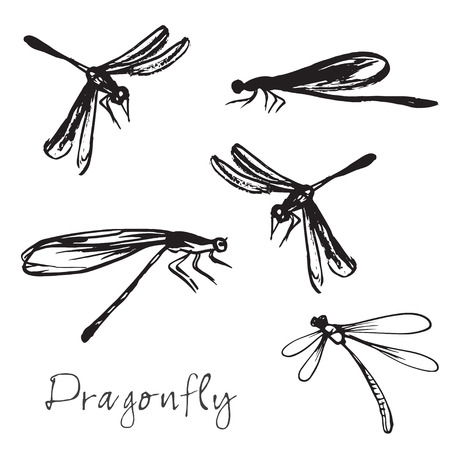 dragonflies: Set of different dragonflies