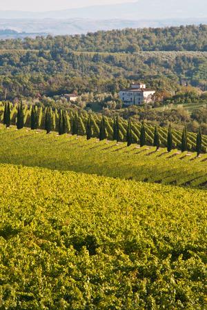 Vineyards in the Chianti region