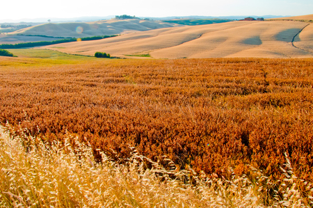 Siena country Stock Photo